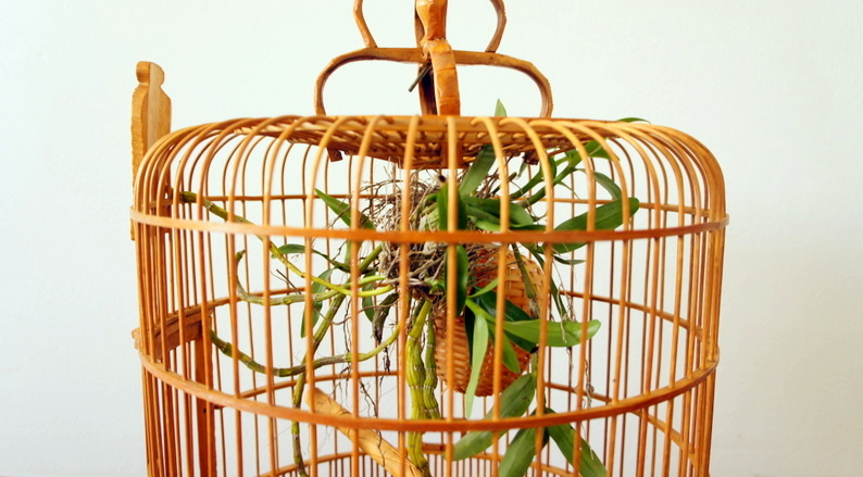 Large Vintage Bamboo Bird Cage Mint The Shop